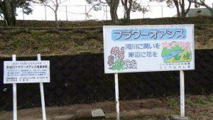 矢合川右岸の河川敷で フラワーオアシス事業を行いました